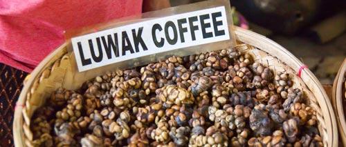 گران ترین قهوه دنیا