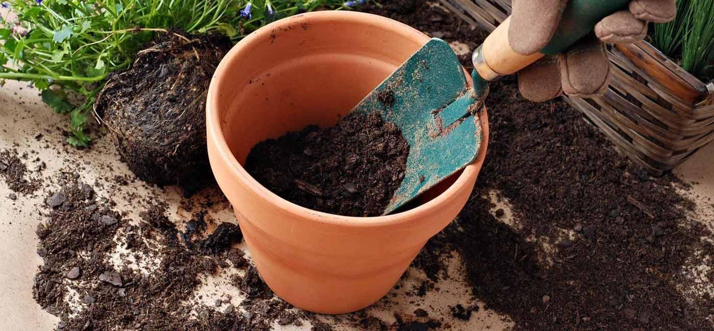 خرید 20 مدل خاک گلدان آماده ارزان برای رشد سریع گیاهان و گل ها