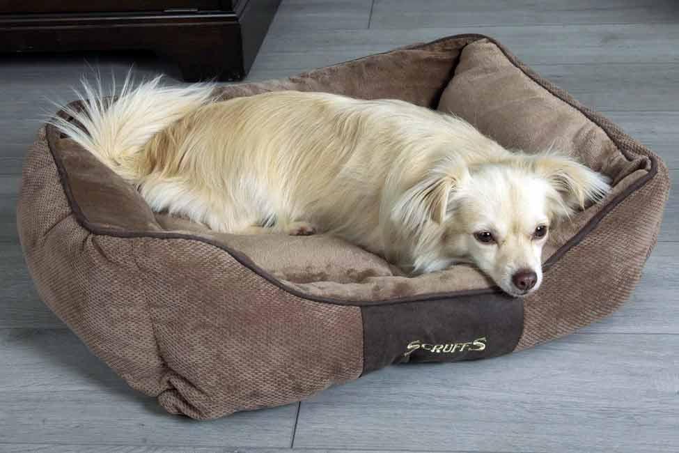 چگونه بهترین جای خواب را برای سگ هایمان آماده کنیم؟